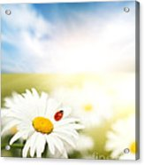 Beautiful Ladybug And Beautiful Flower Acrylic Print by Boon Mee