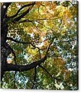 Beautiful Leaf Blanket Acrylic Print