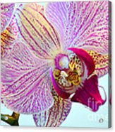 Beautiful Orchid Acrylic Print