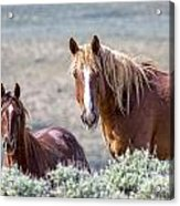 Beautiful Pair Acrylic Print