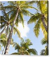 Beautiful Palms Acrylic Print