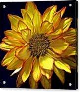 Beautiful Petals Acrylic Print