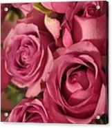 Beautiful Pink Roses 6 Acrylic Print