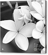 Beautiful Plumeria In Black And White Acrylic Print