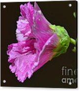 Beautiful Purple Flower Acrylic Print
