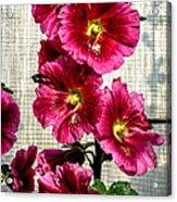 Beautiful Red Hollyhock Acrylic Print by Robert Bales