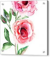Beautiful Roses Flowers Acrylic Print