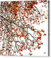 Beautiful Rowan 1 - Square Acrylic Print