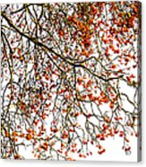 Beautiful Rowan 1 Acrylic Print