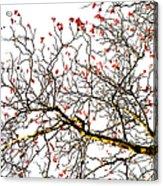 Beautiful Rowan 6 - Square Acrylic Print