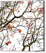 Beautiful Rowan 7 Acrylic Print