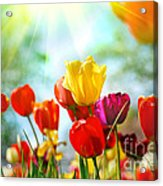 Beautiful Spring Tulips Acrylic Print by Boon Mee
