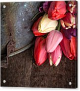 Beautiful Spring Tulips Acrylic Print