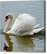 Beautiful Swan Acrylic Print