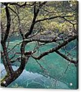 Beautiful Tree Over Blue Water Acrylic Print