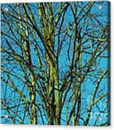 Beautiful Turquoise Sky Acrylic Print
