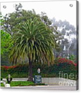 Beautiful Ventura Palm Acrylic Print