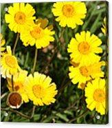 Beautiful Weeds 32655 Acrylic Print