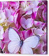 Beautiful White Butterfly Acrylic Print