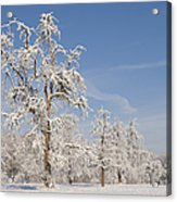 Beautiful Winter Day With Snow Covered Trees And Blue Sky Acrylic Print