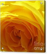 Yellow Rose Macro Acrylic Print