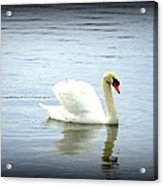 Beauty And Elegance Acrylic Print