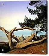 Beauty And The Beach Acrylic Print