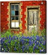 Beauty And The Door - Texas Bluebonnets Wildflowers Landscape Door Flowers Acrylic Print