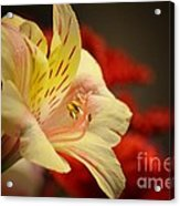 Beauty Beheld Acrylic Print