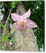 Beauty From Below Acrylic Print