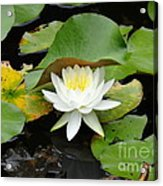 Beauty From The Deep Acrylic Print by Olivia Blessing