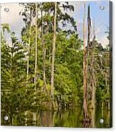Beauty In A Swamp Acrylic Print