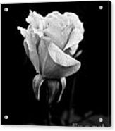 Beauty In Black And White Acrylic Print