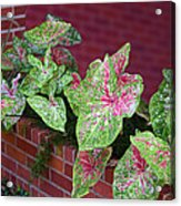 Beauty In Decorative Foliage Acrylic Print