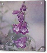 Beauty In Purple Acrylic Print