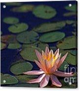 Beauty In Simplicity Acrylic Print