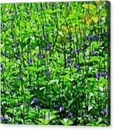 Beauty In The Meadow Acrylic Print