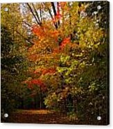 Beauty In The Woods Acrylic Print by Jocelyne Choquette