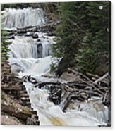 Beauty In The Woods Acrylic Print