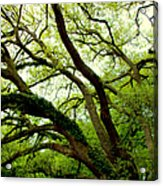 Beauty In Time Acrylic Print