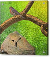 Beauty Is In The Belief Of The Beholder Acrylic Print