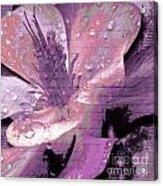 Beauty Ix Acrylic Print by Yanni Theodorou