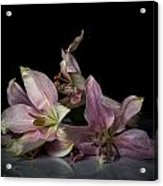 Beauty Of Decaying Lilies Acrylic Print