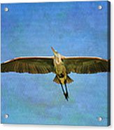 Beauty Of Flight Textured Acrylic Print