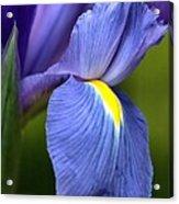 Beauty Of Iris Acrylic Print