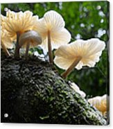 Beauty Of Mushrooms Argentina Acrylic Print