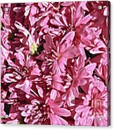 Beauty Of Pink Acrylic Print