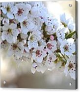 Beauty Of Spring Acrylic Print