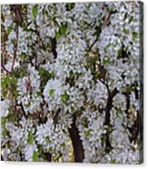 Beauty Of Spring Acrylic Print by Yvette Pichette
