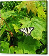 Beauty Of Summer Acrylic Print